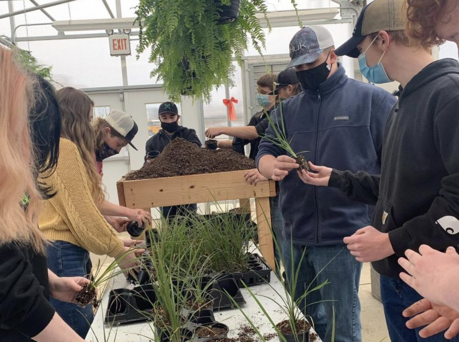 Students are involved in all aspects of the greenhouse project, from initial planting to sales to the public.