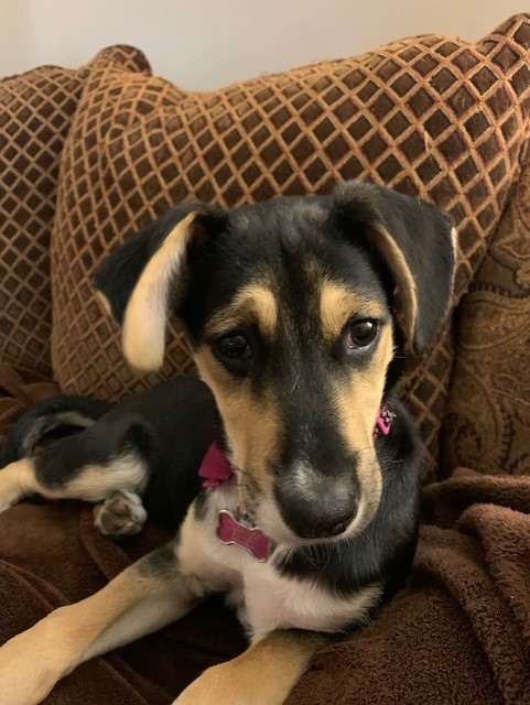 Often shelters don't relay correct information to families looking to adopt pets.  Holly, adopted by Annette Manlief, is much larger than expected.